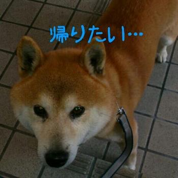 2012-04-28_18.31.21.jpg